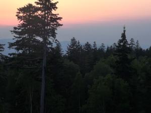 Anochecer en un bosque de Hokkaido