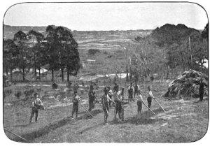 Niños ainu en las tareas de granja, Escuela Misión de Hakodate. Fotografía de John Batchelor.